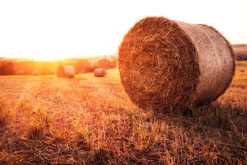 Strohballen auf einem Feld bei Sonnenuntergang. Fotoväggar