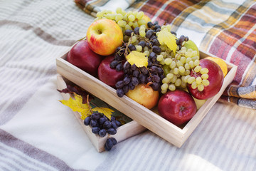 picnic box yellow orange red green fruits grape apples cozy plaid pillows background