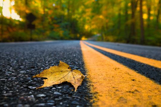 Road Leaf
