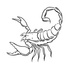 graphic scorpion, vector