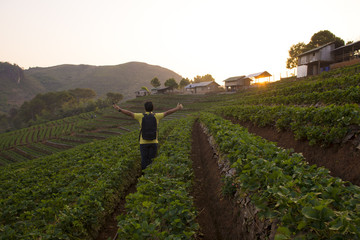 Backpacker is traveling into Strawberry field in Chiangmai, Thailand.