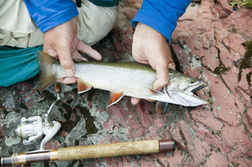 Man hold Brook Trout