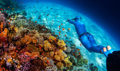 Wall Mural - Woman freediver glides over vivid coral reef in a crystal clear tropical sea