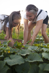 A Mother And Daughter Harvesting Vegetables From Their Garden In Fort Langley