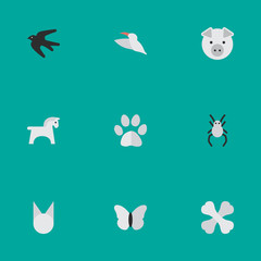 Vector Illustration Set Of Simple Fauna Icons. Elements Tarantula, Piggy, Cat And Other Synonyms Hoof, Moth And Horse.