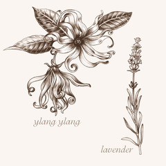 Ylang, lavender. Set of medical herbs.