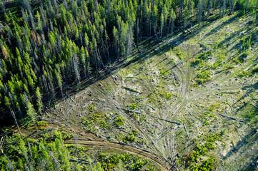 Cut forest in shape of tree near Bear Valley Creek. Idaho, USA.