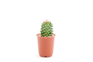 Cactus in the pot isolated on white background.