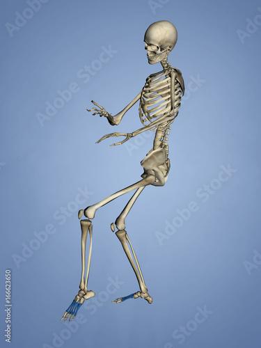 Metatarsal Bones, 3D Model