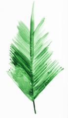fresh twig of palm tree