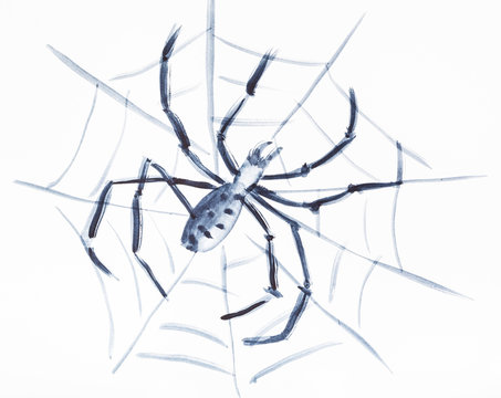 Spider on the web on white paper