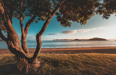 Tuinposter Nieuw Zeeland Sunrise in New Zealand Paihia Beach