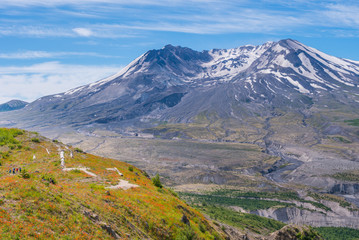 Amazing view of flowers and hills near big volcano along a fascinating Harry's Ridge Trail. Mount St Helens National Park, South Cascades in Washington State, USA