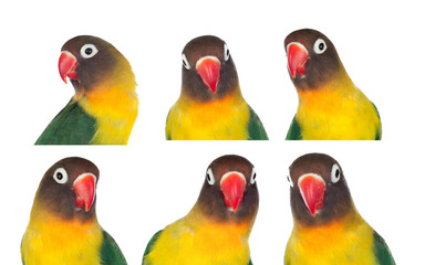 Nice sequence with portraits of a parrot