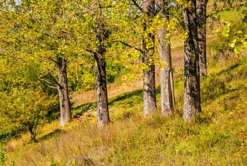 few trees on grassy hillside at autumn sunrise