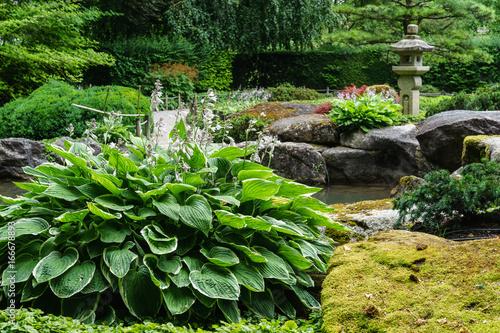 D Bayern Augsburg Japanischer Garten Funkien Vor Wasserfelsen