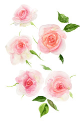 Watercolor roses a La prima. Hand-drawn illustration of a delicate rose. For wedding design, greeting cards, invitations, textile print