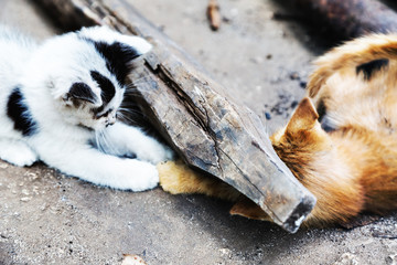 Katzenpaar beim Spielen