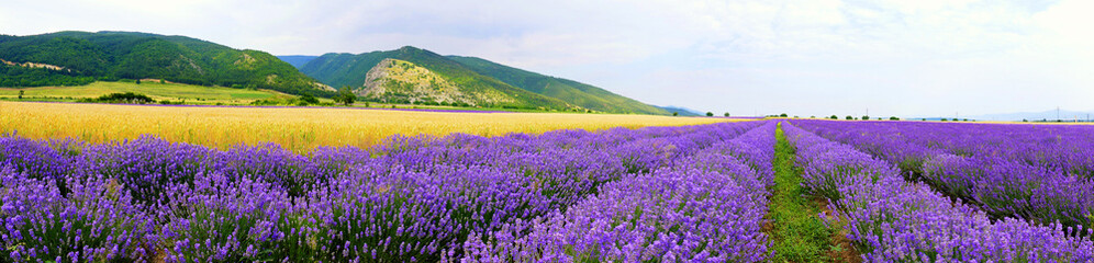 Panorama at the foot of the Balkan Mountains. Lavender bloom levels. Near Kazanlak, Bulgaria soil and climate are excellent for lavender growing.