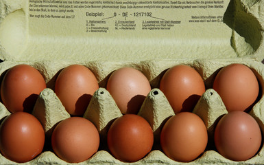 Illustration picture of eggs