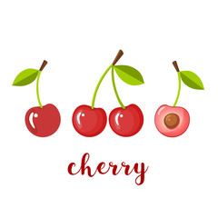 Pair of three cherries, isolated vector illustration