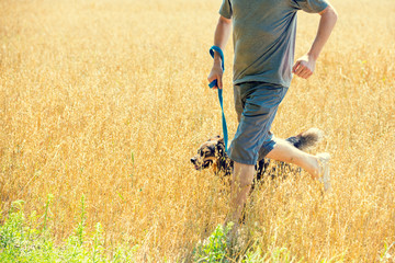 A man with a dog on a leash runs through the oat field in summer