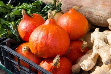 Printed kitchen splashbacks Autumn Red pumpkins in market