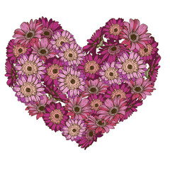 Heart of pink and violet daisies flowers isolated on white background.  illustration.