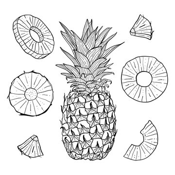 Vector hand drawn pineapple and sliced pieces set. Tropical engraved style illustration.