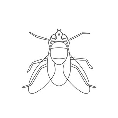 Fly line drawing