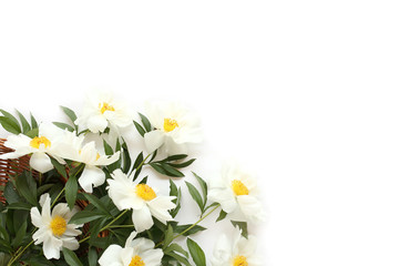 Beautiful gift - white peonies with green leaves in wooden basket on white background. Top view Valentine`s Day concept.