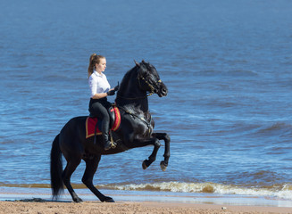 Fotoväggar - Woman riding horse on beach of sea. Stallion stands on hind legs.