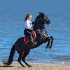 Fototapete - Rearing Andalusian black stallion and young woman on beach.