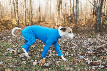 Dog in a onesie outdoors