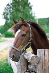 Beautiful horse portrait