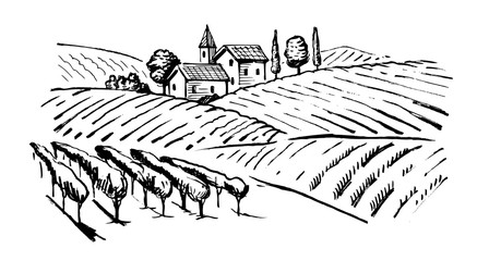 illustration of wineyard