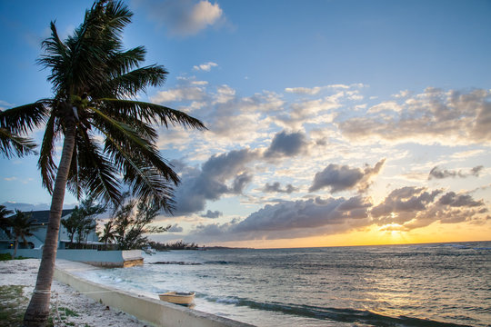 Palm Tree and Sunset by the Shore in Bahamas