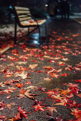 Winter in the park. Colorful fallen leaves on the park path