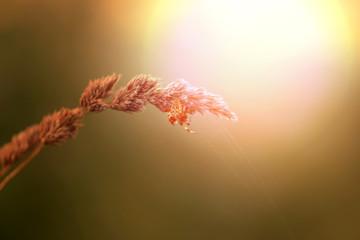 Bright photo macro spider cross