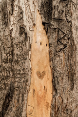 loveheart graffiti on a tree, add your own initials