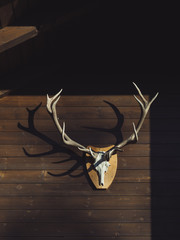 Deer antler on old wooden wall