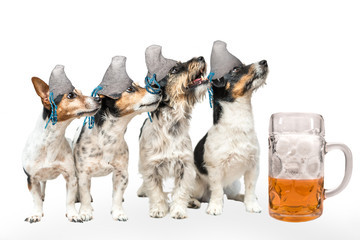 Four bavarian dogs with beer - jack russell terrier