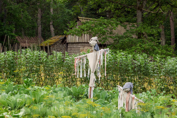 Scarecrow guarding the harvest in a village garden. The open air Museum in Tallinn.  Attractions and history of Estonia. Rural landscape. The summer season. Security garden.