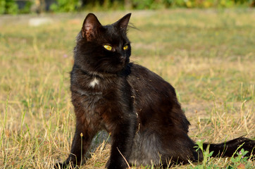 Portrait of black cat with green eyes outside,photo