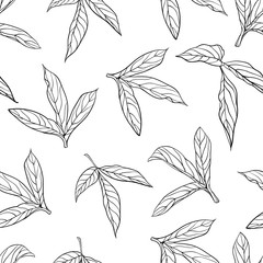 beautiful monochrome black and white seamless background leaves Hand-drawn.