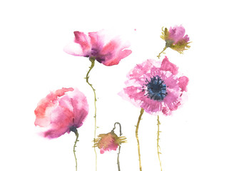 Modern poppy flower painting, floral art, watercolor painting, can be used for home decortae