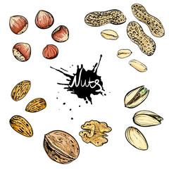 Hand drawn color vector illustration of walnuts, hazelnuts, pistachios, peanuts, almonds. sketch. Vector eps 8.