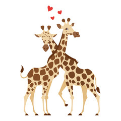 cartoon style illustration of two giraffes.
