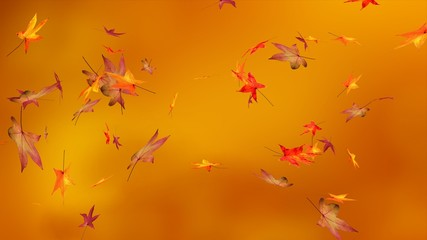 Autumn, blur background, maple leaves