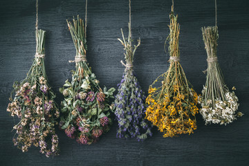 Hanging bunches of medicinal herbs and flowers. Herbal medicine. Retro toned photo.